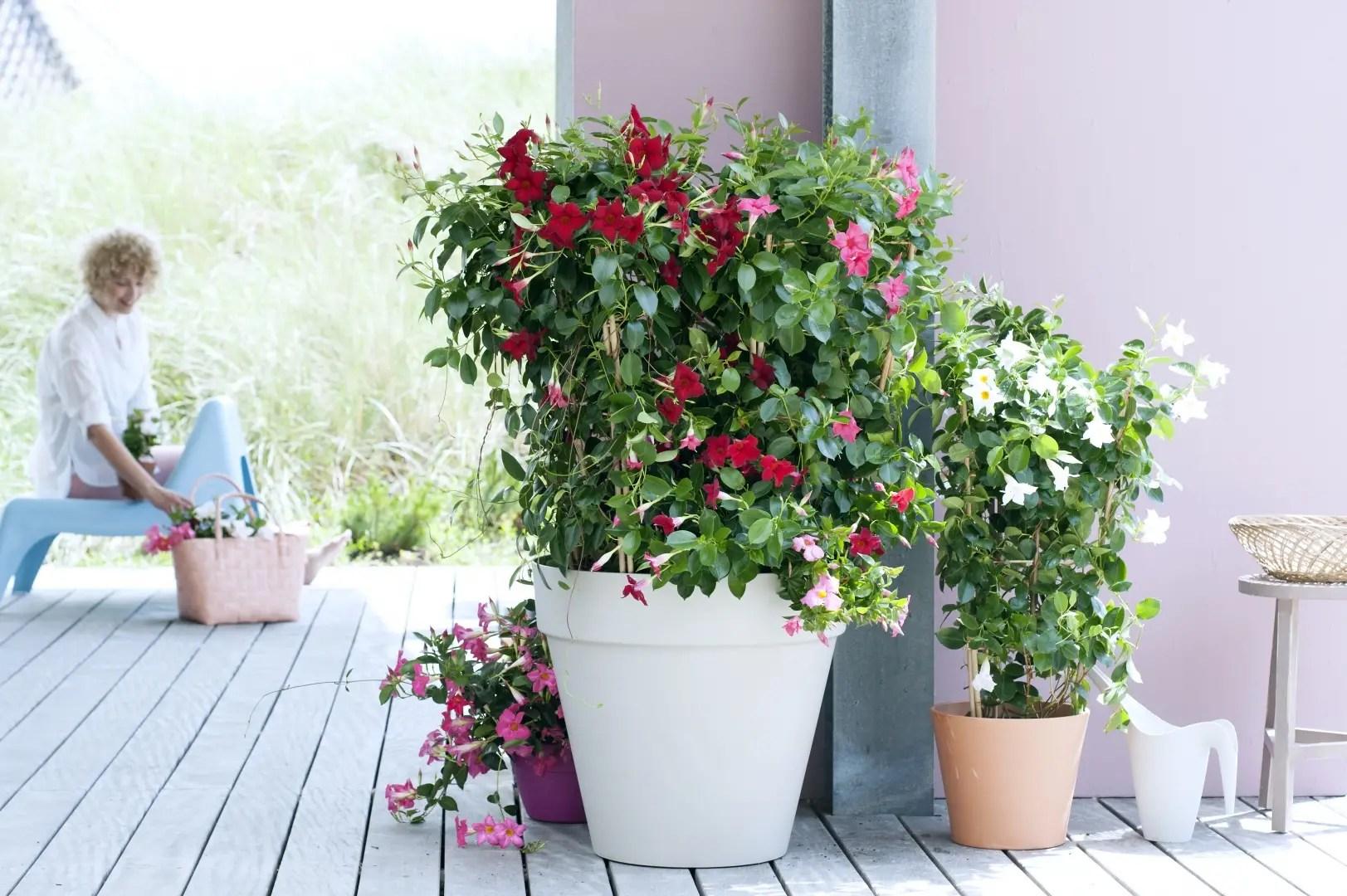 tuin inspiratie mandeville bloemenzee tot ver in het. Black Bedroom Furniture Sets. Home Design Ideas