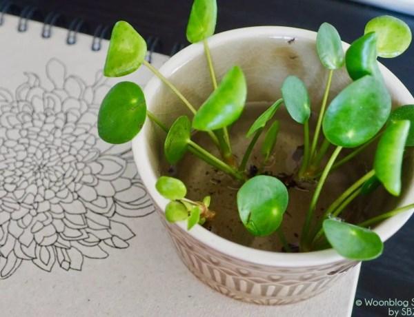 Groen wonen | Do it yourself - Pilea stekken - Woonblog StijlvolStyling.com