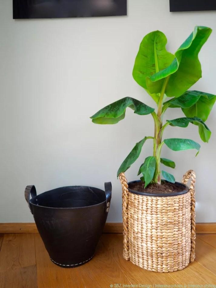 Groen wonen | Bananenplant brengt de tropische sfeer in huis - Woonblog StijlvolStyling.com