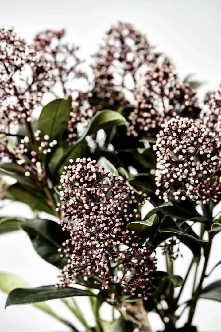 Tuin inspiratie | Winterwonderland tuin of balkon met deze planten | Woonblog StijlvolStyling.com by SBZ Interieur Design