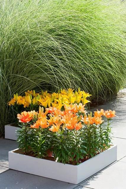 Tuin inspiratie | Lelies-op-pot: bloementrend van 2019 - woonblog StijlvolStyling.com (beeld: ibulb)