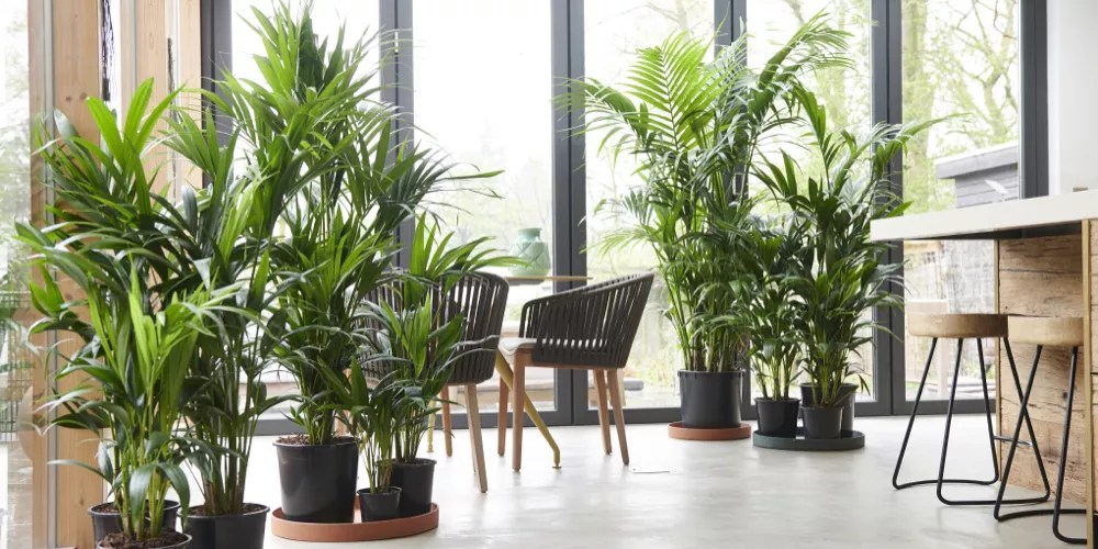 Kentia - Woonblog StijlvolStyling.com - foto credits: Styling Elize Eveleens - Klimprodukties