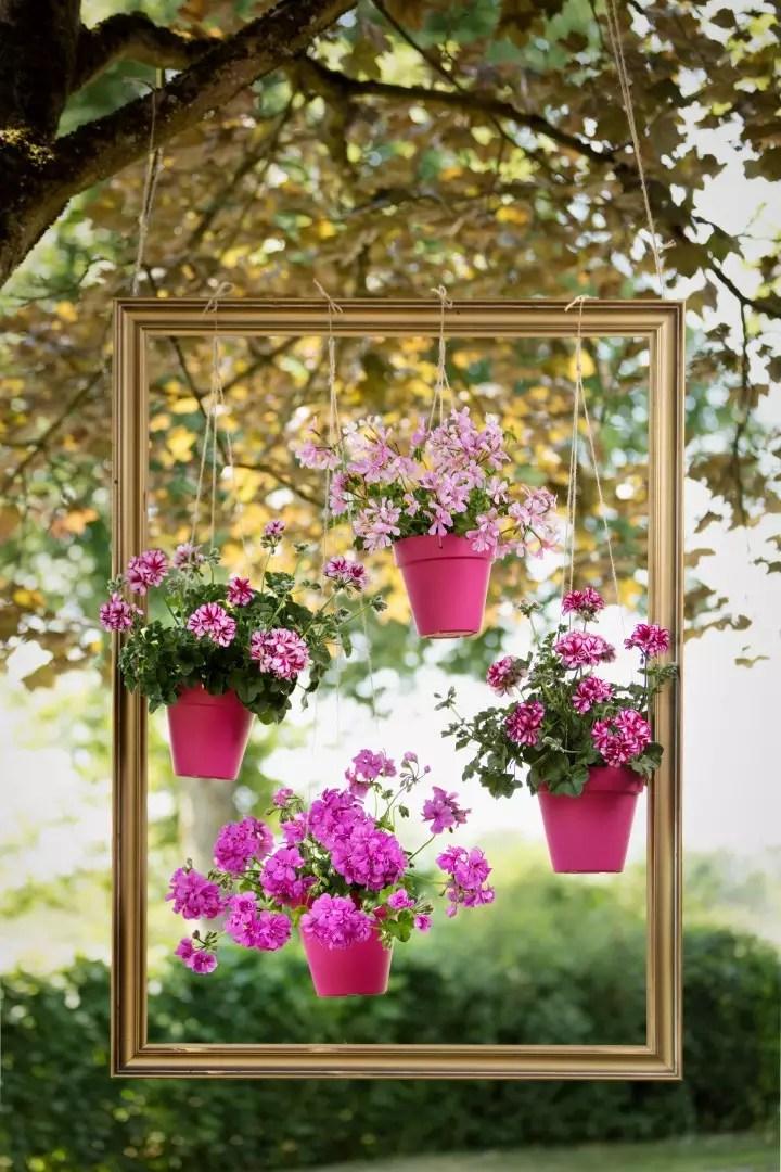 Buitenleven | DIY - Kleur in de lucht met Geraniums - StijlvolStyling.com - Fotocredit: Pelargonium for Europe (PfE)