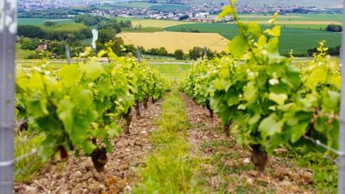 150516 - 2015-05 - Champagne - IMG_3672
