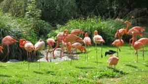 Jardins des Plantes Park- Paris