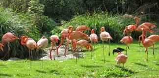 Jardin des Plantes - Parque en París