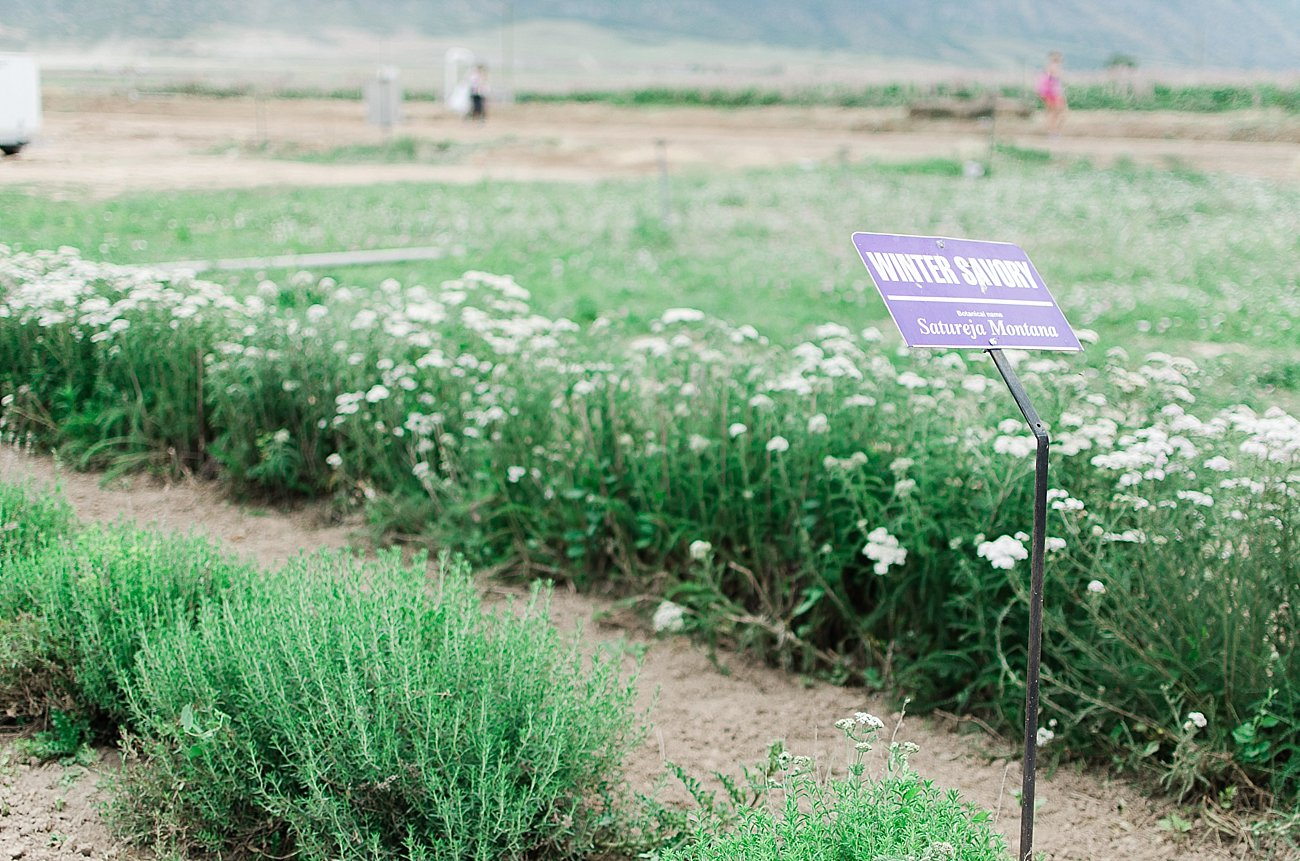Young Living Lavender Farm, Mona, Utah (23)