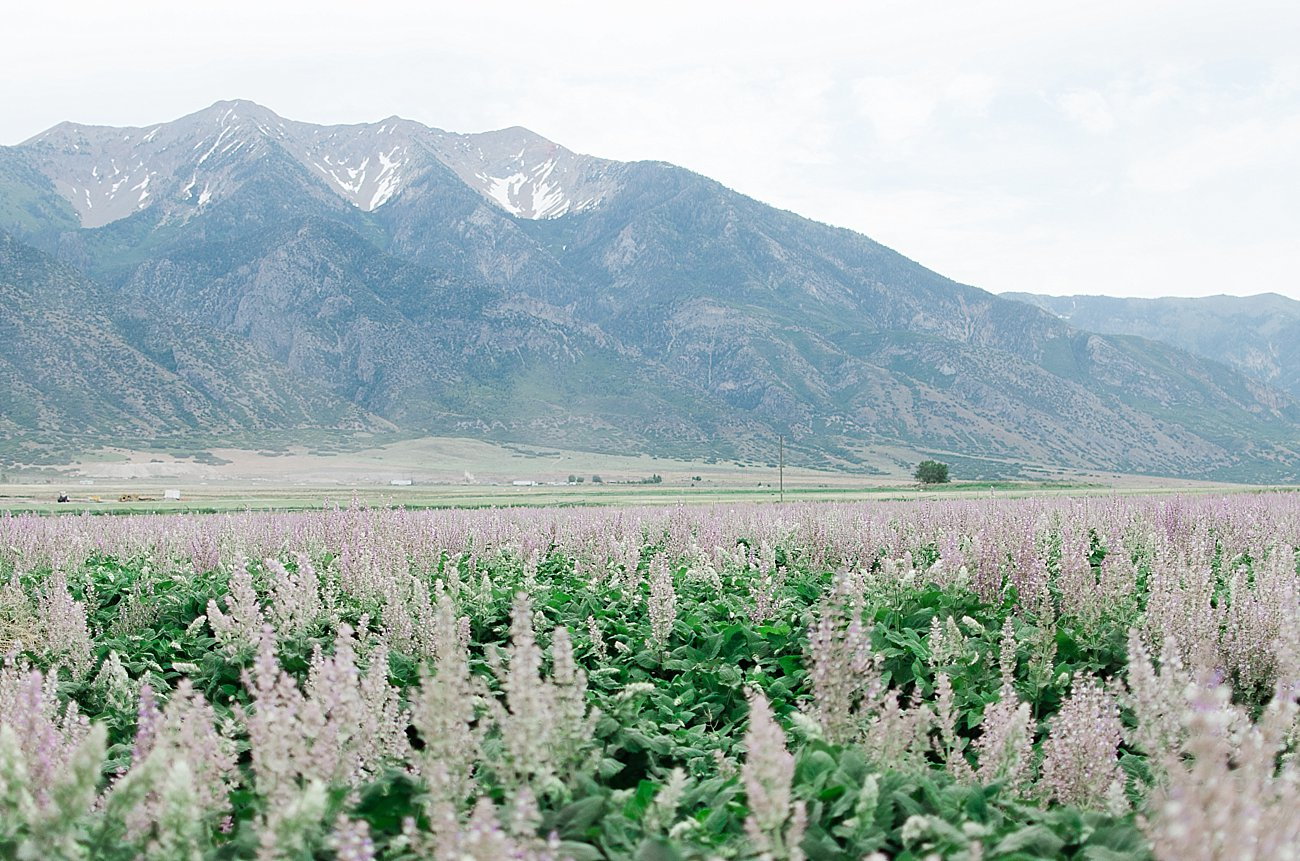 Young Living Lavender Farm, Mona, Utah (17)
