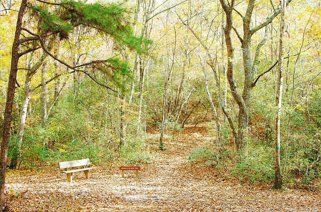 GoHikeNC Occoneechee Mountain Hillsborough Easy, Moderate, Difficult Family Hike (26)