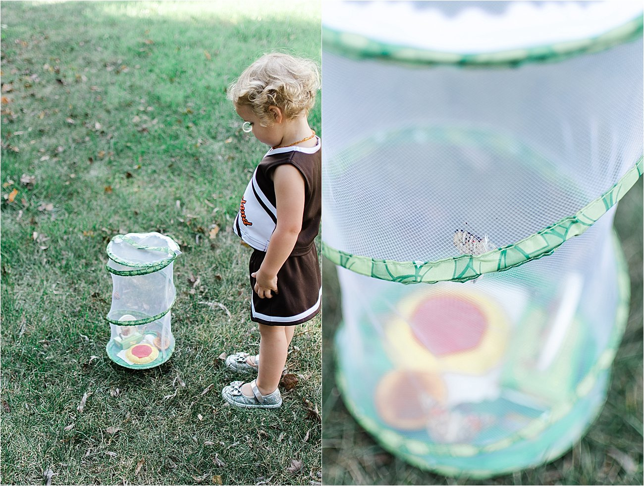 """""""Growing Butterflies at Home"""" - Insect Lore Original Butterfly Garden Review (17)"""