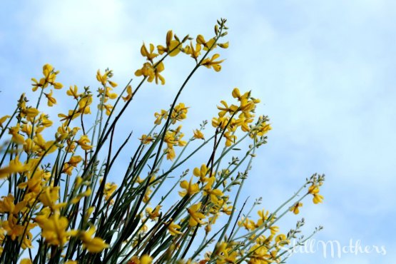 yellow flowers against a cloudy sky in Arizona