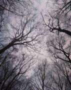 tiergartentrees