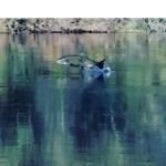 Stanislaus River Salmon Festival