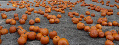 appleridge_pumpkins