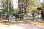 highhill_pony
