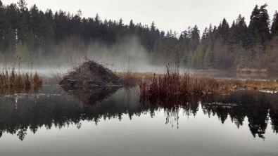 Beaver Lake early morning