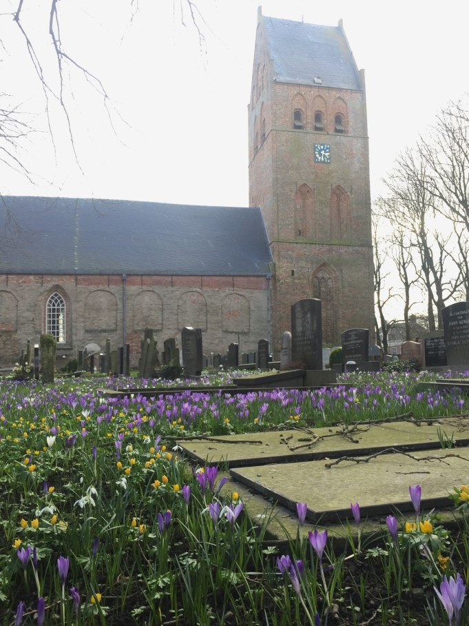 Spring Crocuses mixed with Winter Aconites and Snowdrops at the St. Vituskerk Stiens.