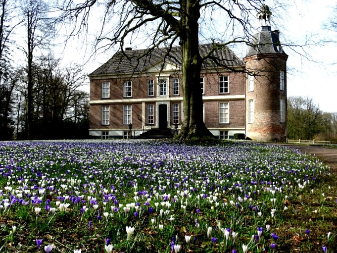 Dutch crocus at Hackfort Castle.