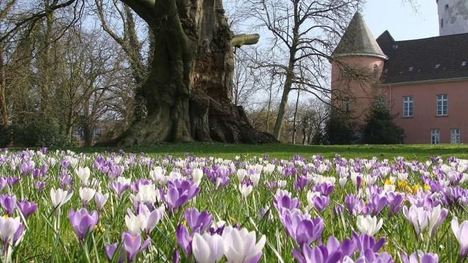 Schlosspark Jever. Bron: website, klik hier.