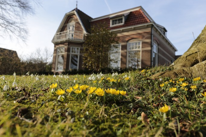 Pomona House in St. Anna-parochie with Snowdrops and Winter Aconites.