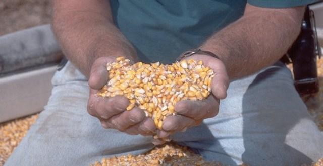 Daca agricultorii vor obtine o recolta buna, vor putea impulsiona cresterea economiei