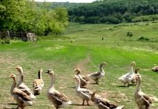 Producătorii bio din zonele de deal și munte ar putea fi certificați în grup