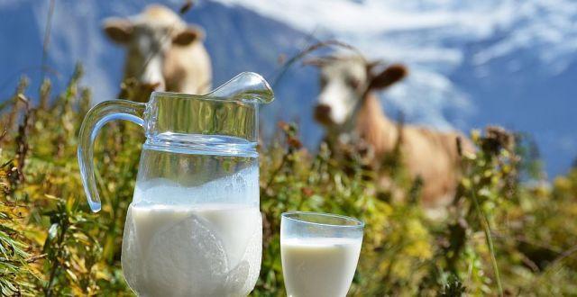 igiena laptelui ansvsa