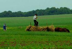 În anul 2010, din totalul suprafeţei agricole utilizate, suprafaţa aflată în proprietate reprezintă în medie 60%, cea arendată 27%, cea concesionata 3%, iar cea luată în parte 2,1%, restul fiind exploatată sub alte forme, se arată în raportul comisiei prezidențiale privind strategia pentru agricultură, industria alimentară și satul tomânesc, prezentată la începutul lunii iulie 2013.