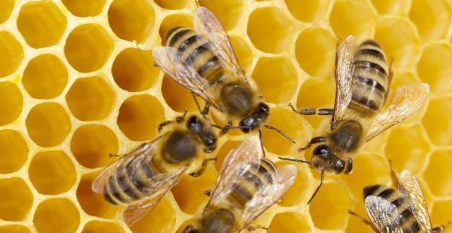 productia de miere din 2013 e mai buna ca cea din 2012