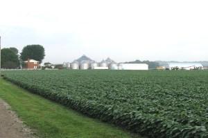 În vreme ce suprafața cultivată s-a redus, iar randamentul e mic, România a ajuns să importe anual 500.000 tone de soia, în valoare de 200 de milioane de euro. O bună parte din aceasta este soia modificată genetic