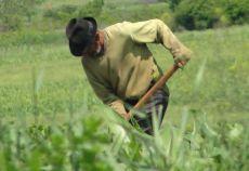 Majoritatea covarsitoare a proprietarilor de terenuri din Romania are peste 60 de ani.