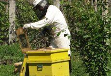 programul national apicol