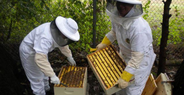 apicultura