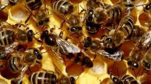 familii-albine1