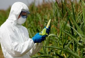 genetically-modified-crops