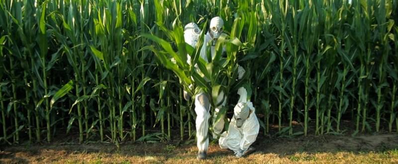 cultivare-omg-ue