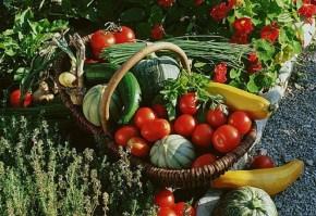 legume-din-gradina