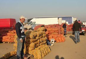 cultivarea cartofilor pndr