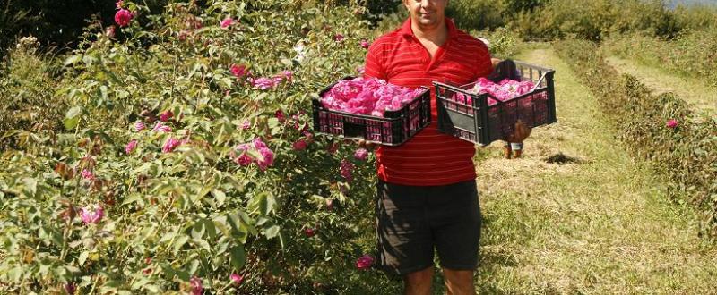 trandafiri_Dan Florea