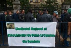 protest crescatori ovine