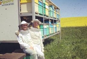 apicultori, albine, apivera
