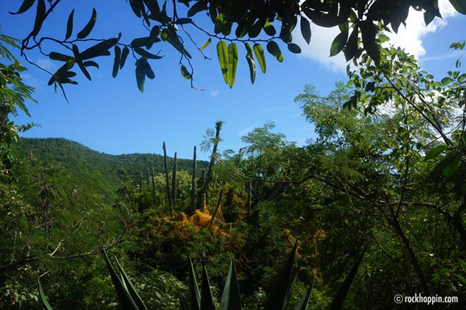 Reef Bay Trail Hike  St John Activities Guide