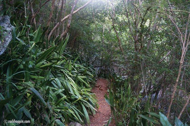 reef-bay-trail-hike-stjohn