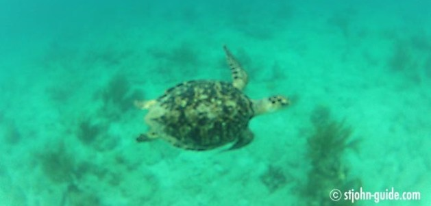 Sea Turtle Watching St. John