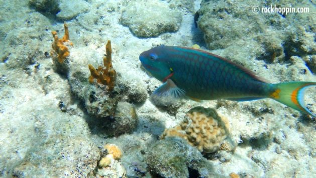 Freediving and Snorkeling on St. John