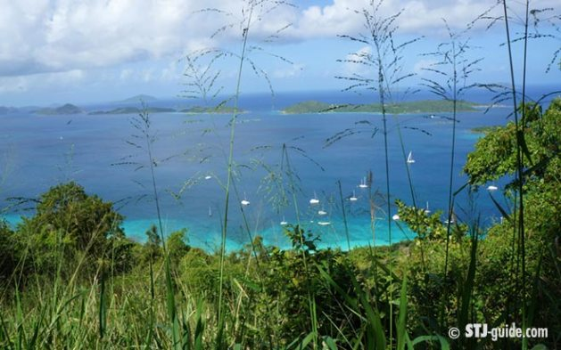 caneel-hill-trail-stjohn-hiking-view-usvi