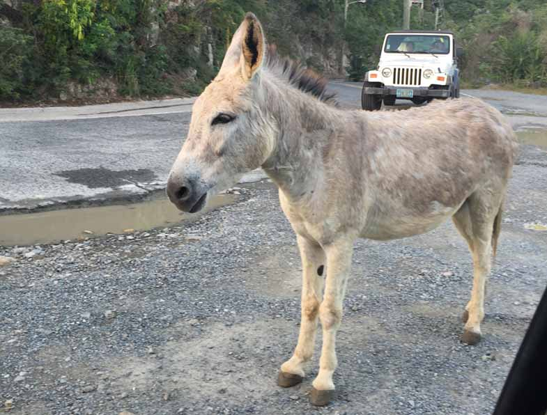 donkeys-on-stjohn