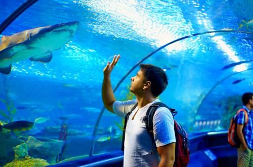 St. Louis Aquarium at Union Station   Coming Fall 2019