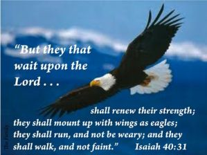 Read more about the article They that wait upon the lord shall renew their strength- Isaiah 40:31