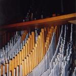 organ4.jpg